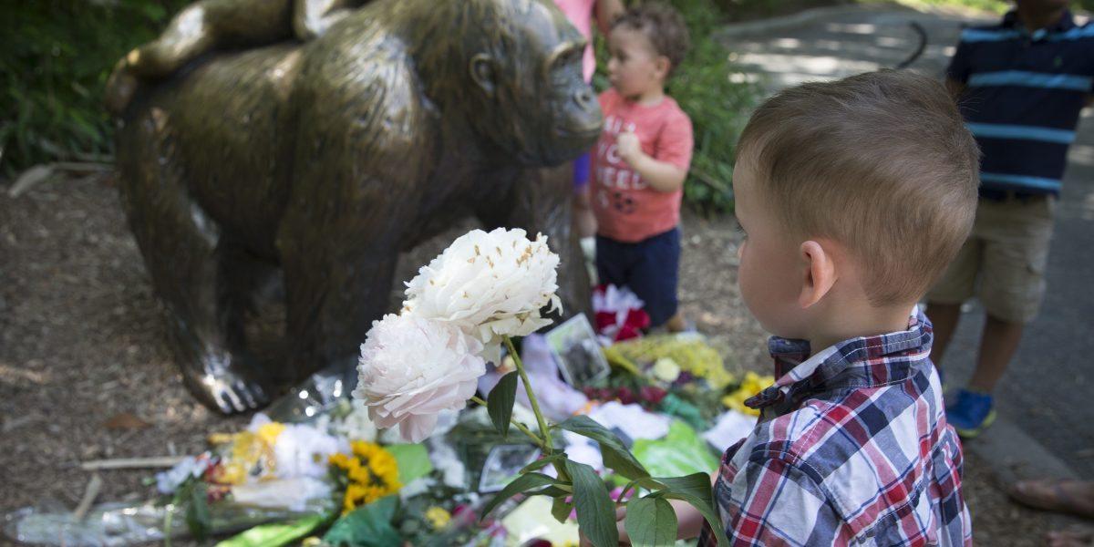 Gorila Harambe muerto