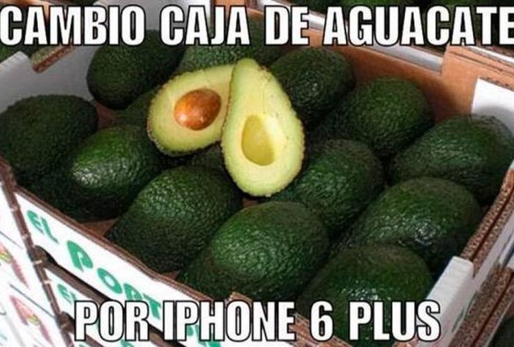 aguacate2