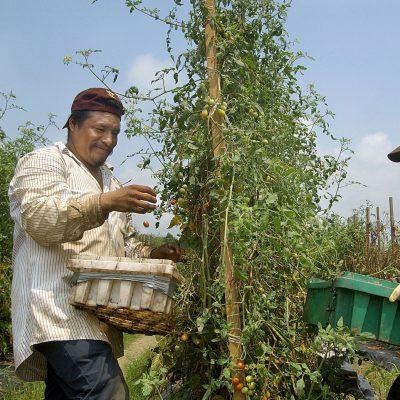 Pequeños productores mexicanos recibirán más recursos