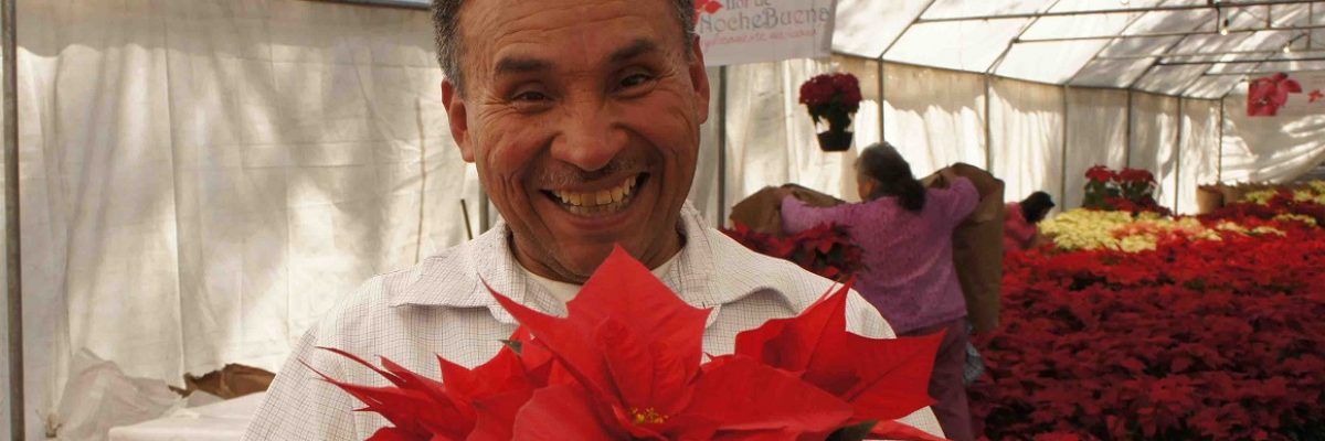 #FlorMexicana: La nochebuena es un regalo de México para el mundo