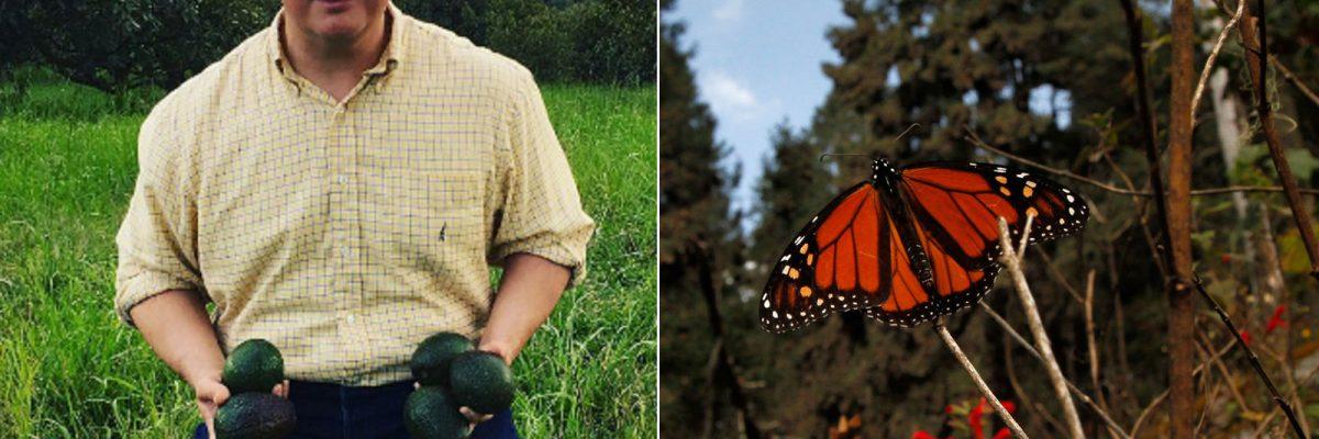 #Peligro: Estados Unidos quiere más aguacates, pero eso pone en riesgo a las mariposas monarca