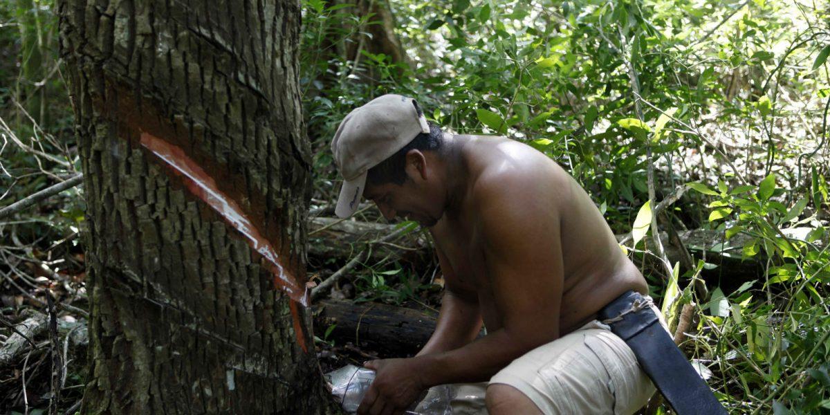 El origen maya del chicle