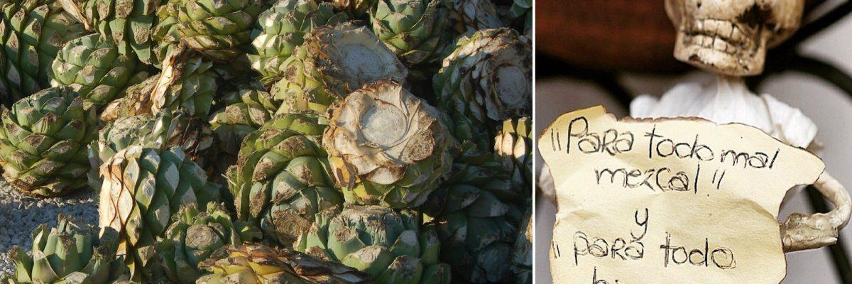 #BebidaSagrada: El mezcal es el arte de experiencias destiladas
