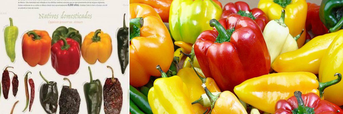 #Picante: ¿Sabes cuántos tipos de chiles hay en México?