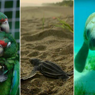 Científicos latinos cuidan especies en peligro.