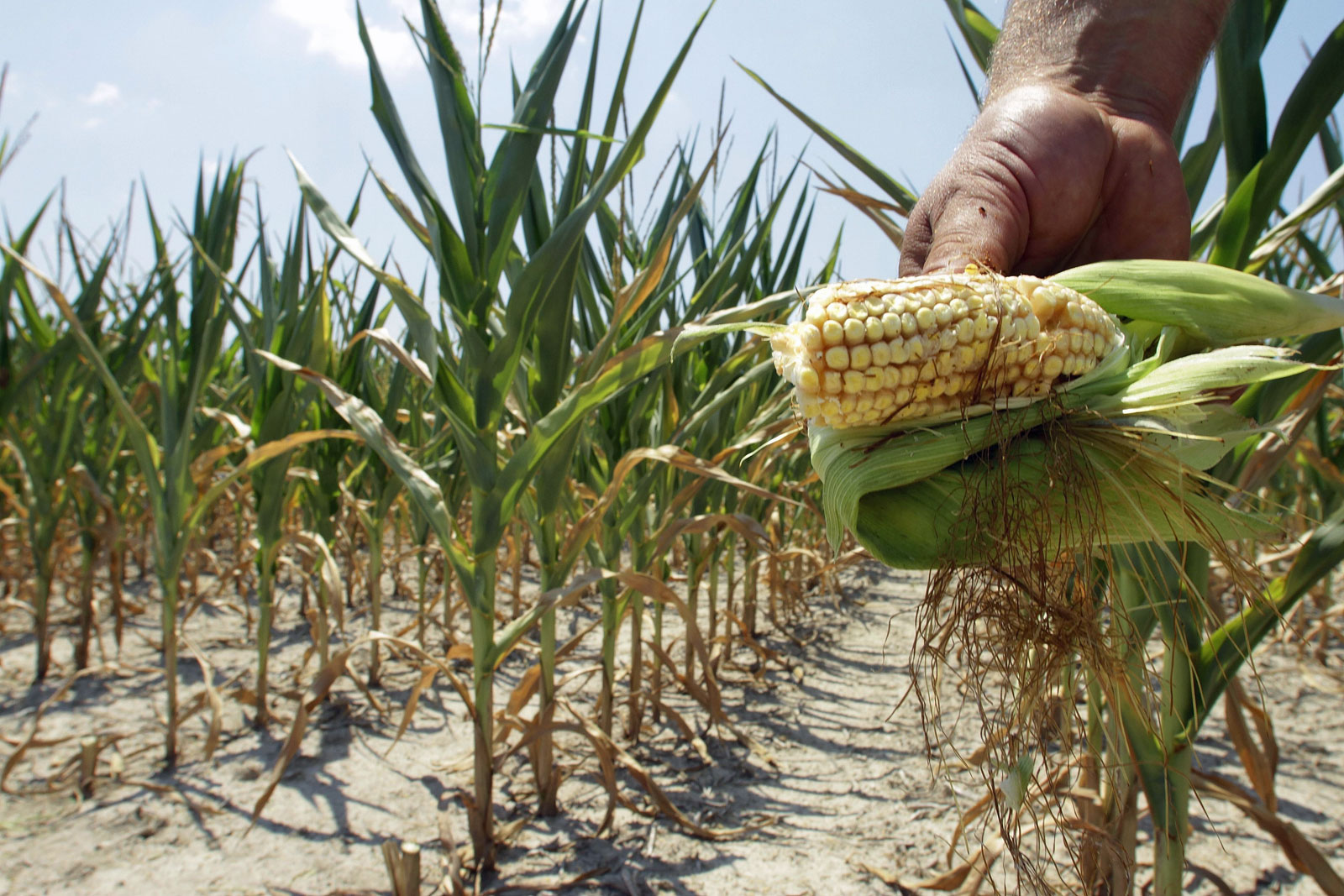 Boicot contra maiz gringo