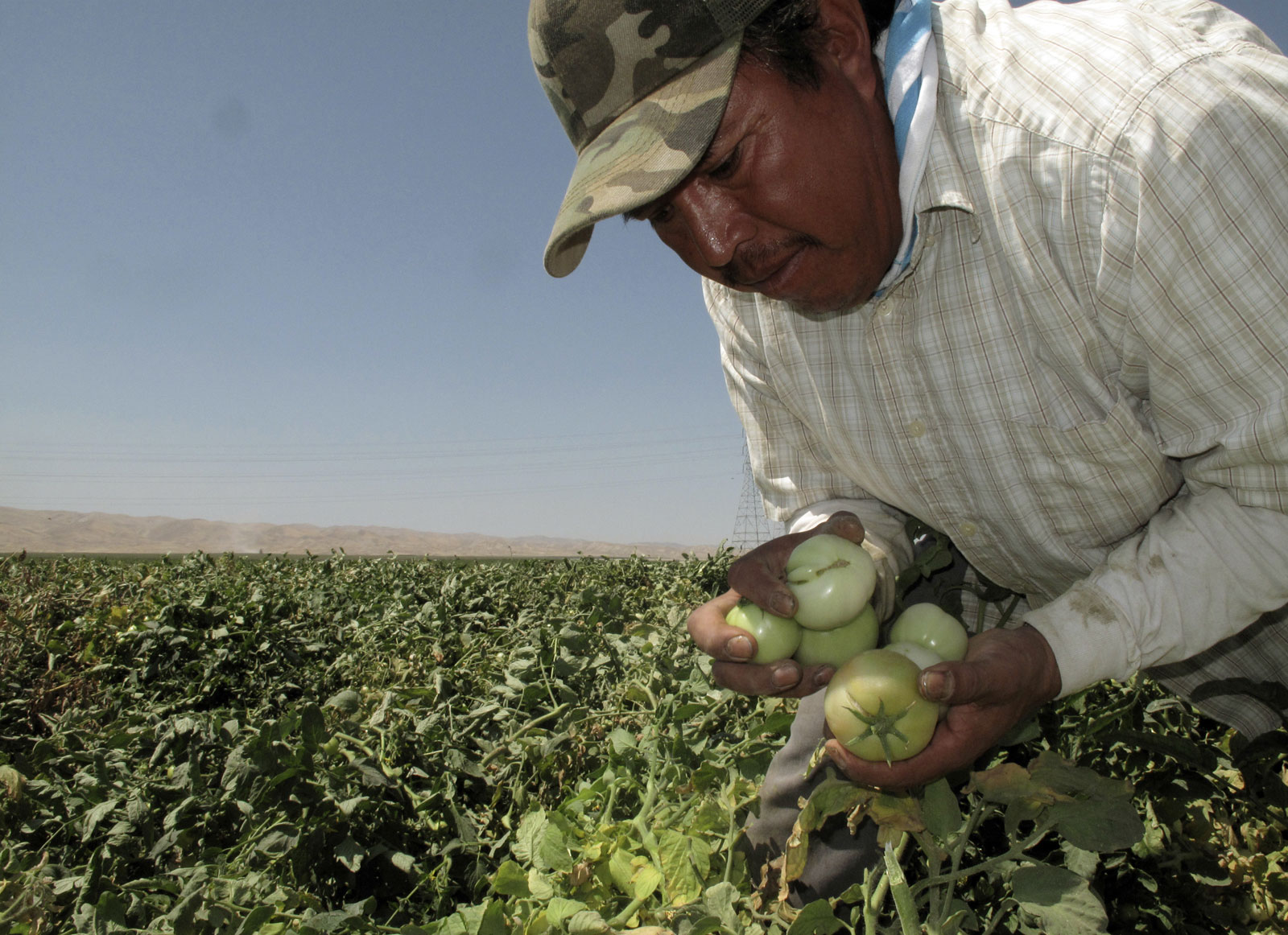 Campesinos en California