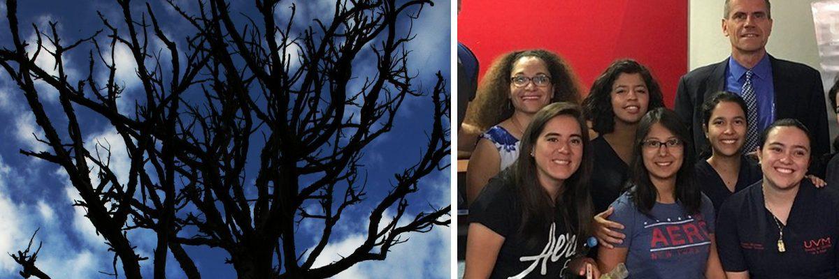 Palo Azul: Mexicanos descubren árbol que puede curar el cáncer de mama