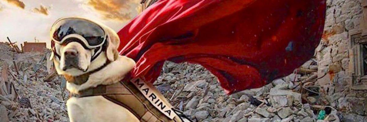 [Imagen: Perrita-Frida-1200x400.jpg]
