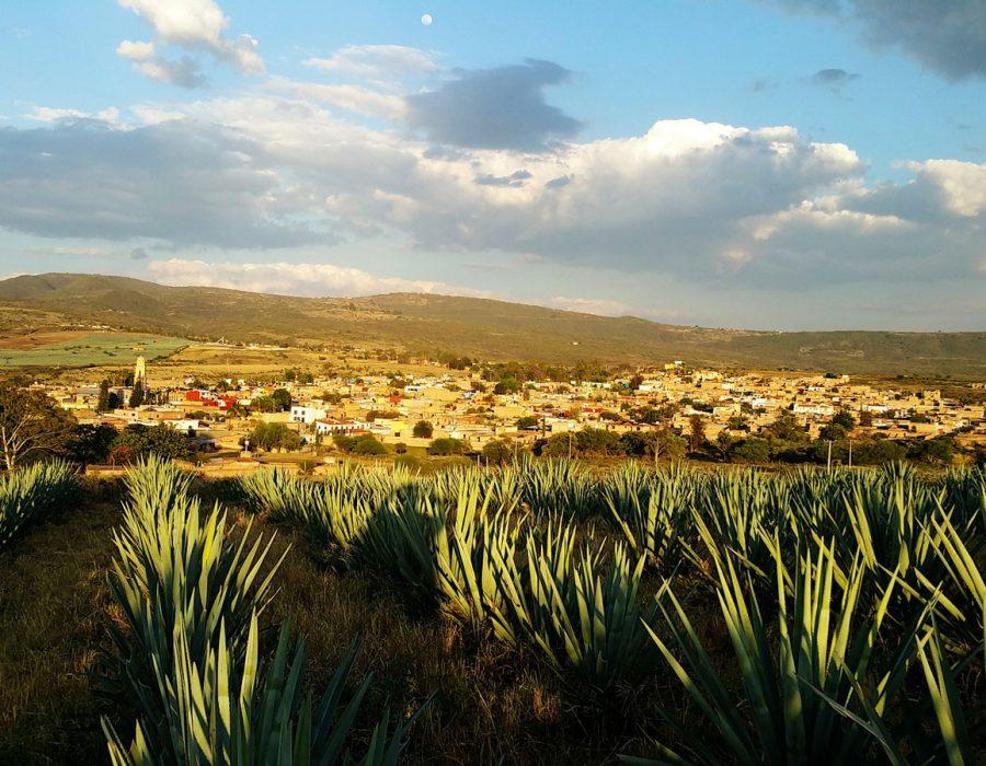 #Tesoro: Los mexicanos recibieron un regalo más valioso que el oro: el agave