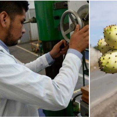 Crean ladrillos con baba de nopal
