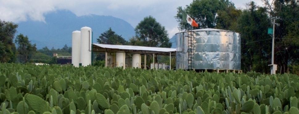 Biogás de nopal