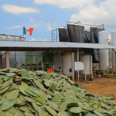 Transforman el nopal en biogás y electricidad limpia