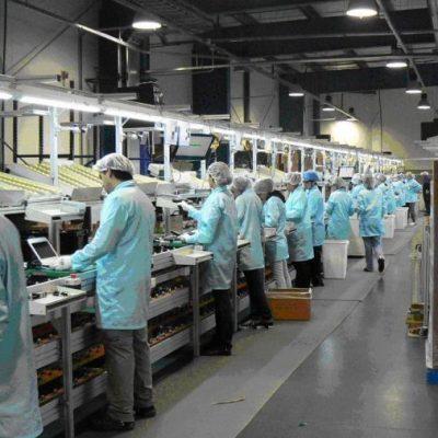 Cinco empresas mexicanas que triunfan en Estados Unidos