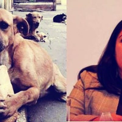 Diputada mexicana pide eliminar perros callejeros; al final rectifica