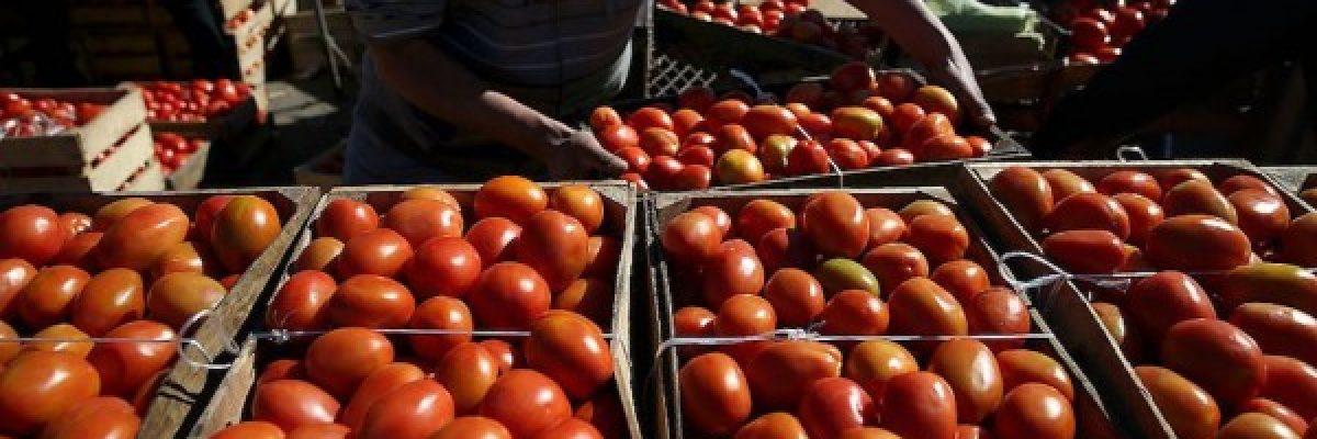 Se retrasa unos días fallo sobre los aranceles a tomate mexicano