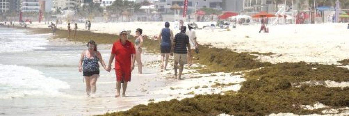 Las playas mexicanas enfrentan el mayor sargazo de la historia