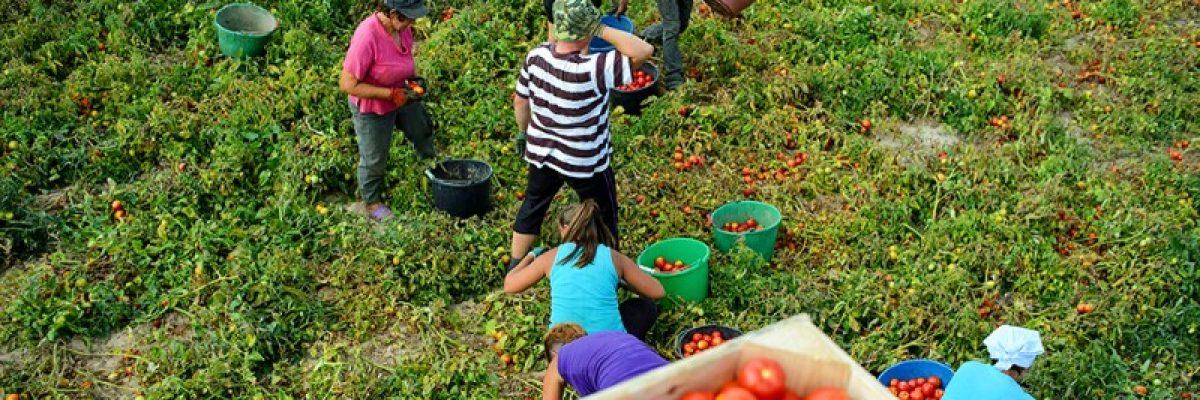 Con esta medida, tomateros mexicanos le darían en lo que más le duele a Trump