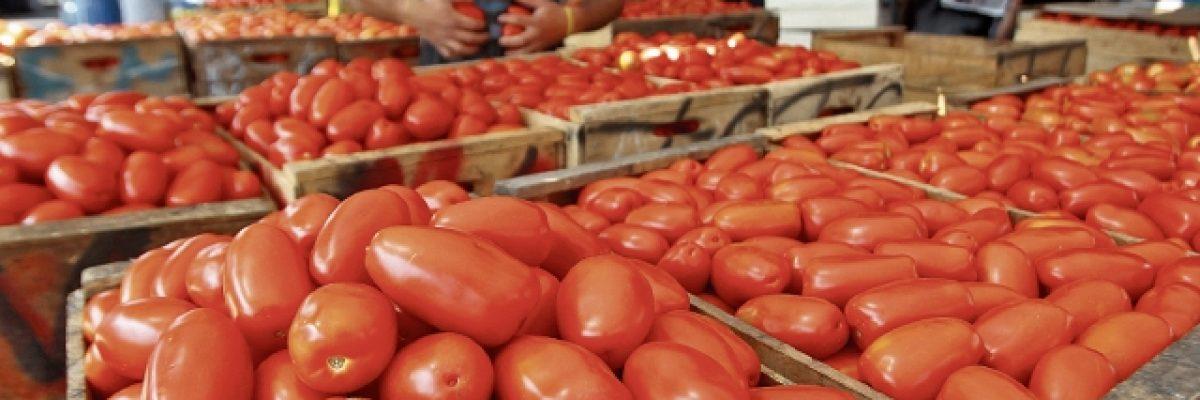 ¡No puede ser! Corte de EU dio revés a los productores de tomate mexicanos