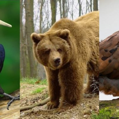 Estos animales vivieron en México y ahora están extintos
