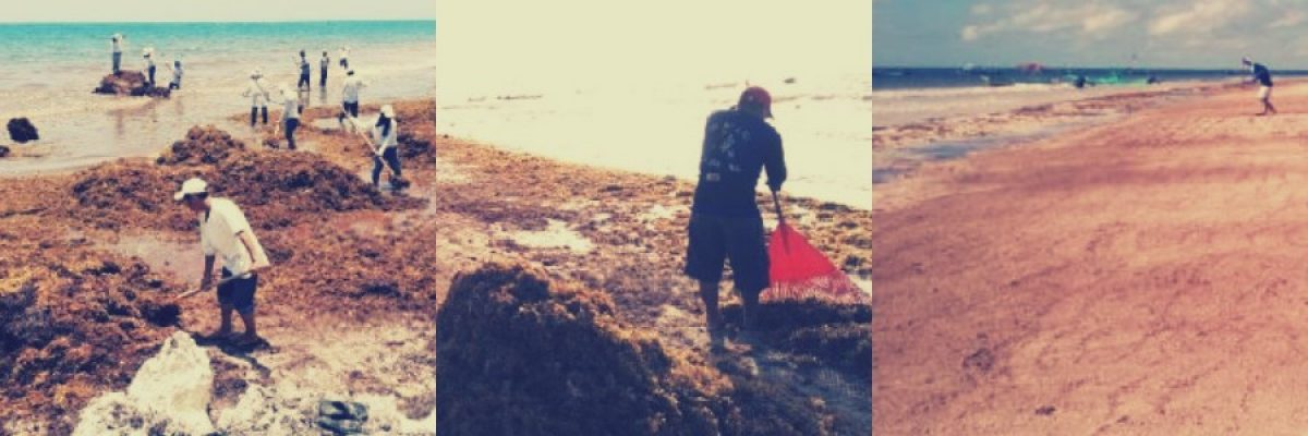 Estas son las playas mexicanas que están limpias de sargazo